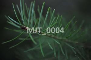 MJT_0004