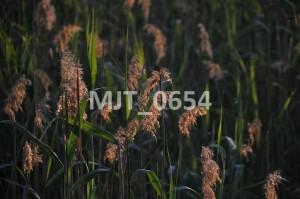 MJT_0654