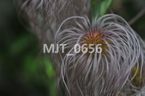 MJT_0656