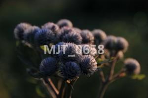 MJT_0658
