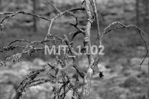MJT_1102