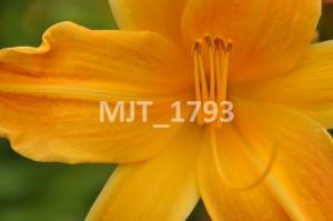 MJT_1793