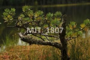 MJT_1807