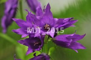 MJT_2015