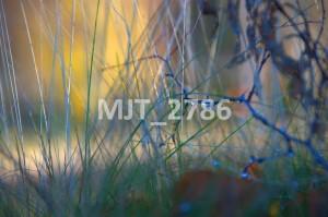 MJT_2786