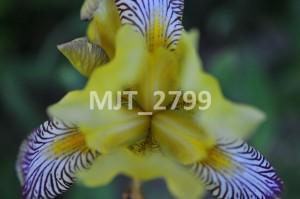 MJT_2799