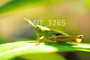 MJT_3265