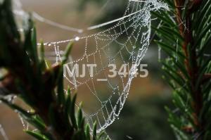 MJT_3445