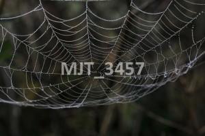 MJT_3457