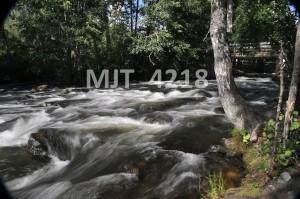 MJT_4218
