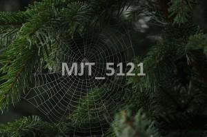 MJT_5121