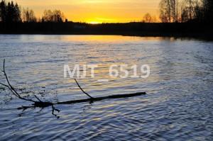 MJT_6519