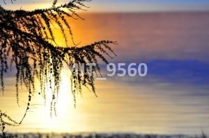 MJT_9560
