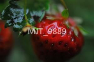 MJT_9889