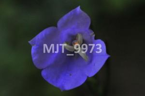 MJT_9973