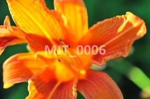 MJT_0006