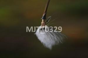 MJT_0329