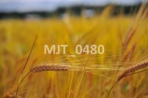 MJT_0480