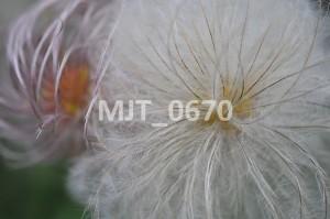MJT_0670