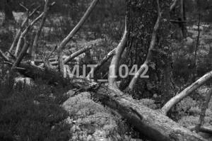 MJT_1042