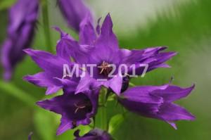 MJT_2017