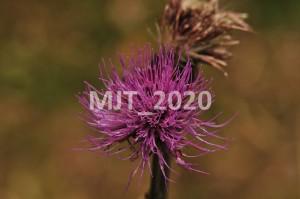 MJT_2020