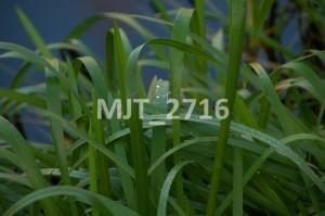 MJT_2716
