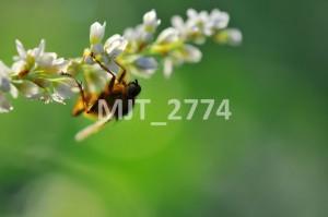 MJT_2774