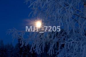 MJT_7205