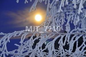 MJT_7210
