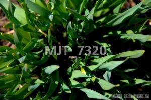 MJT_7320
