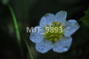 MJT_9893