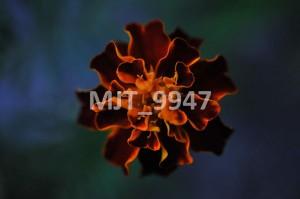 MJT_9947