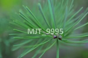 MJT_9995